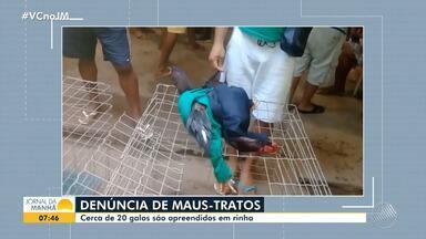 Polícia apreende mais de 20 galos de rinha no bairro de Santa Mônica - Foram encontrados 20 animais no local, com um grupo de homens. Todos foram levados para a Central de Flagrantes.