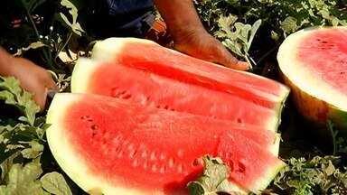 Colheita da melancia é comemorada com festa em Lagoa do Bauzinho, em Rio Verde - Festa tem degustação da fruta, corrida com melancia e até competição de quem come mais. São colhidas cerca de 10 mil toneladas da fruta por ano no município.