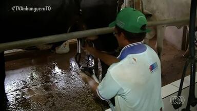 Produtores do Tocantins participam de encontro para discutir qualidade do leite - Produtores do Tocantins participam de encontro para discutir qualidade do leite