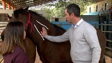 Veja dicas para aplicar injeção nos cavalos - Alguns cuidados evitam inflamações no local da aplicação.