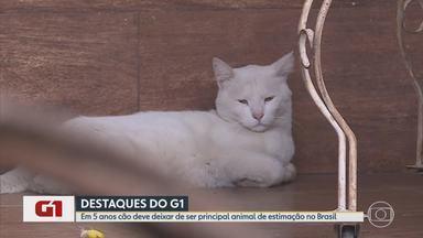G1 no BDMG: Gatos podem superar cães como animais de estimação no Brasil em 5 anos - Um levantamento do Instituto Pet Brasil aponta que, entre 2013 e 2018, o número de felinos nos lares brasileiros cresceu 8,1%; já o de cães aumentou 3,8%, menos da metade.