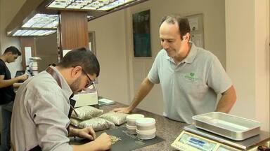 Colheita do café encerra com baixa produtividade em Minas - Produtores estão preocupados, com a oscilação do preço da saca do café. Neste ano, a média foi de 30 sacos por hectare.