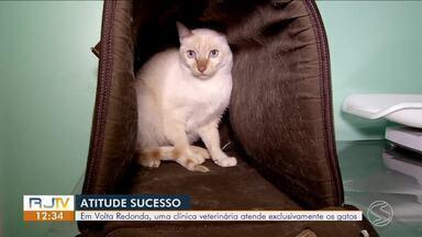 Clínica veterinária atende exclusivamente gatos em Volta Redonda - Ideia foi criar espaço para deixar os animais confortáveis e responder melhor a tratamentos.