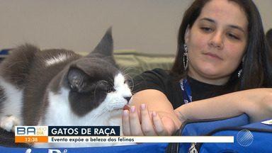 Competição reúne mais de 100 gatos de raça em Salvador e elege o animal mais belo do país - Evento contou com felinos de todos os tipos e tamanhos.