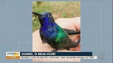 Bombeiro cuida de beija-flor machucado, pássaro se recupera e é entregue ao Cras - Pássaro recebeu o nome de Juarez e pode ser solto, em breve