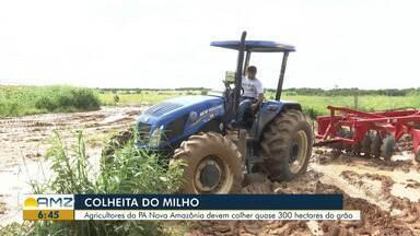 PA Nova Amazônia se preparam para a colheita do milho em Roraima - Produtores rurais estimam colher quase 300 hectares do grão.