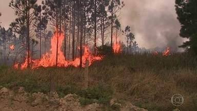 Em Santa Catarina, Parque Estadual da Serra do Tabuleiro está queimando desde terça (10) - O incêndio já destruiu mil hectares de vegetação. A área equivale a quase mil campos de futebol. Já são 36 horas tentando controlar as labaredas.