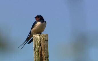Holanda pelos céus - Terra da Gente faz registro inédito para o Brasil de refúgio das aves na Holanda.