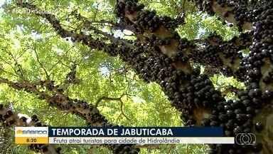 Temporada de jabuticaba leva visitantes a fazenda de Nova Fátima - Propriedade tem o maior pomar de jabuticaba do Brasil.