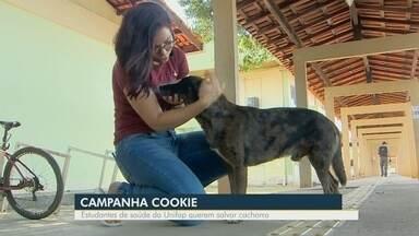 Estudantes do Amapá fazem campanha para ajudar cachorro com câncer - Animal vive na Universidade Federal do Amapá.
