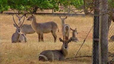 Conheça animais exóticos criados numa propriedade em Caucaia - Saiba mais em g1.com.br/ce
