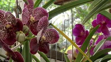 Orquidário de Mogi recebe Festival de Orquídeas neste final de semana - Programação vai até o próximo final de semana.