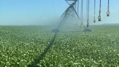 Balsas (MA) deve ter produção de soja maior que a safra anterior - Expectativa dos agricultores é grande e eles aguardam agora o retorno do período de chuvas.