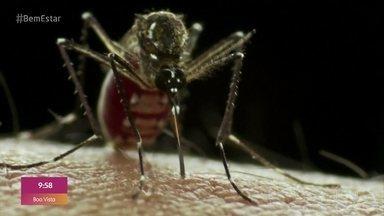 Casos de Dengue aumentam assustadoramente no país - A médica Ana Escobar explica os cuidados de prevenção e tira dúvidas da plateia