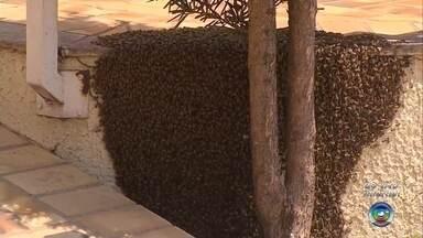 Loja é fechada e bombeiros isolam área para retirada de enxame de abelhas em Garça - O Corpo de Bombeiros isolou um enxame de abelhas que se formou no muro de uma loja de sucos nesta terça-feira (17) na rua Carlos Ferrari, em Garça (SP).