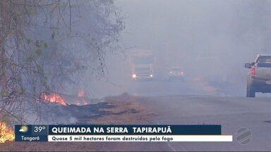 Quase 5 mil hectares são destruídos pelo fogo - Quase 5 mil hectares são destruídos pelo fogo