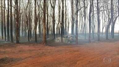 Estudantes e trabalhadores interrompem atividades para escapar do fogo, em Goiás - As queimadas continuam assustando moradores e prejudicando o meio ambiente, em Goiás. Enquanto bombeiros e brigadistas não param de trabalhar, funcionários de indústrias tiveram que interromper as atividades por causa do fogo.