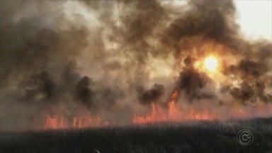 Queimada atinge área de pastagem de Magda - Uma queimada atingiu uma área de pastagem que liga as cidades de Magda (SP) e Valentim Gentil (SP).