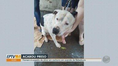 Comerciante é preso por suspeita de atirar em pit bull em Bebedouro, SP - Animal foi levado à clínica veterinária, submetido a curativos e liberado ao proprietário.