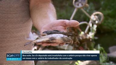 Secretaria multa empresa por descarte irregular de resíduos; vários peixes morreram - Prefeitura embargou e multou empresa em R$ 10 mil