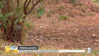 Verdejando: Coletivo FIlhas da Terra e estudantes do CEF 28 vão arborizar a Lagoinha - Lagoinha é uma nascente de rio localizada no Sol Nascente. O local é alvo de descarte incorreto e está poluído. O objetivo do reflorestamento é evitar o assoreamento do rio.