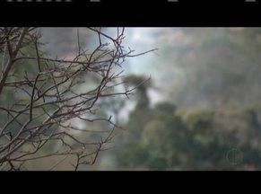 Bombeiros e brigadistas realizam trabalho de rescaldo em Governador Valadares - O rescaldo foi realizado em área de vegetação do Pico da Ibituruna. Troncos e galhos foram enterrados, para evitar novas chamas.