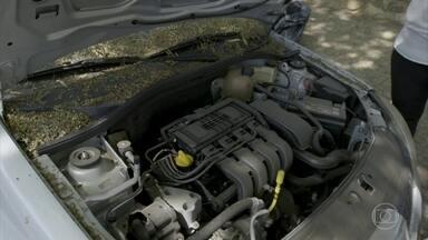 Queda de folhas pode ser problema para quem deixa o carro na rua - Queda de folhas pode ser problema para quem deixa o carro na rua.