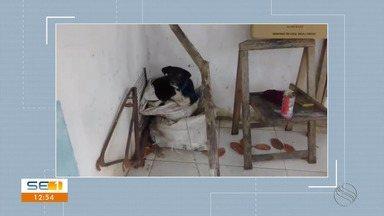 Telespectador denuncia maus tratos a cães em Capela - Telespectador denuncia maus tratos a cães em Capela.
