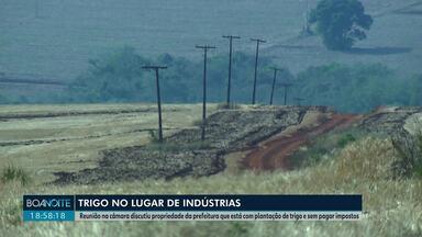 Vereadores querem cobrar imposto de agricultor que plantou trigo em terreno da prefeitura - Agricultor usou o terreno por quatro anos de forma indevida