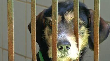 Legislação para cuidado com animais domésticos muda rotina de famílias de Mogi - A Prefeitura informou que no Centro do Bem Estar Animal da cidade, desde 2006, cerca de 6 mil cães e gatos foram castrados gratuitamente.