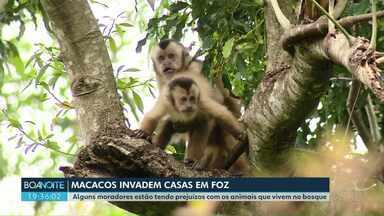 Macacos invadem casas em Foz do Iguaçu - Alguns moradores estão tendo prejuízos com os animais que vivem no bosque.