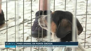 Findi animal movimenta Ponta Grossa no fim de semana - 44 dos 50 animais levados para doação foram adotados no primeiro dia.
