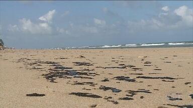 Manchas em praias nordestinas são mistura de óleos venezuelanos, aponta relatório - Informações são de um relatório publicado pela Petrobras. A hipótese mais forte é de acidente na transferência de óleo de um navio para o outro. O governo pediu ajuda aos Estados Unidos para esclarecer o caso.