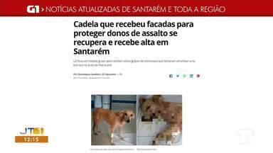 Confira os destaques do G1 Santarém e região acessando nossa página na internet - Saiba o que é destaque acessando o maior portal de notícias da região.