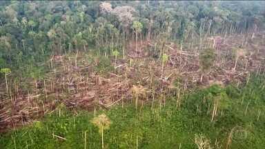 Alerta de desmatamento na Amazônia quase dobra em relação a setembro de 2018 - Novos dados do Inpe mostram que, em setembro deste ano, os alertas de desmatamento na Amazônia quase dobraram em relação a setembro do ano passado. Área sob alerta de desmatamento na Amazônia chegou a 1.447,4 km2 em setembro, o que é quase o tamanho da cidade de São Paulo.