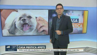 'Casa Prática': saiba que plantas e alimentos podem fazer mal aos cães - Algumas plantas e plantas, se ingeridos, podem fazer mal à saúde dos cães.