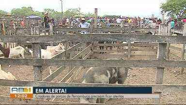 Adagro intesifica fiscalização após foco de peste suína em Alagoas - A entrada de porcos está proibida em Pernambuco.