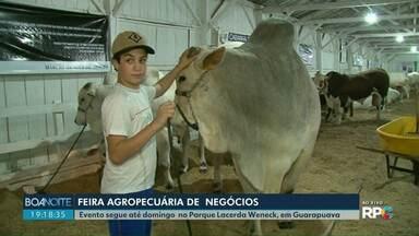 Feira Agropecuária de Negócios vai até domingo em Guarapuava - Esta é a primeira edição do evento que neste ano substitui a tradicional Expogua