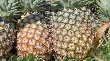 Procura pelo abacaxi aumenta com o início da safra da fruta - Com o início da safra do abacaxi a procura pela fruta cresce também entre os consumidores. O motivo é que nessa época fica fácil encontrar frutos bem mais doces nas variedades pérola e havaí.