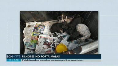 Filhotes de cães são resgatados de dentro do porta-malas de um carro - Policiais tiveram que quebrar um dos vidros do carro para poder tirar os filhotes.