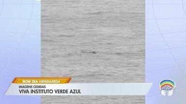 Baleia-jubarte é avistada em Ilhabela - Não há registros de jubartes nessa época do ano na região. Por ser incomum, a hipótese dos biólogos é de que o animal estaria passando pela região rumo às áreas geladas da Antártica.
