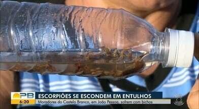 Escorpiões se escondem em entulhos no bairro do Castelo Branco, em JP - Moradores do Castelo Branco, em João Pessoa, sofrem com bichos.
