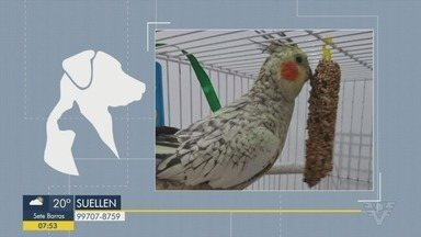 Animais estão disponíveis para adoção na Baixada Santista - Além disso, uma calopsita fugiu no Canal 6 em Santos.