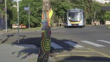 Árvores com crochê chamam a atenção em Londrina - A Rosa enfeitou a árvore em frente a casa dela, mas já tem outras árvores na cidade coloridas com o crochê.