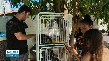 Feira de adoção de gatos é realizada em praça na Mangabeiras, Maceió - Espaço público ganhou a solidariedade de estudantes.
