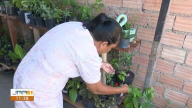 Plantas dentro de casa ajudam famílias a prevenir doenças em Roraima - Contato com as plantas pode servir como terapia para o controle da ansiedade.