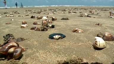 Óleo nas praias de Alagoas enfraquece economia local - Praias de 13 cidades de Alagoas já foram afetadas pelo óleo. A venda de pescado na região caiu e está atingindo a economia.