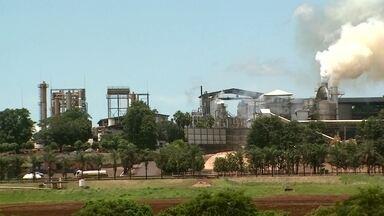 Usinas que transformam resíduos em energia e combustível - A transformação da vinhaça, resíduo de usina de cana de açúcar, em combustível, e da casca de amendoim em energia elétrica no interior de São Paulo. É a terceira reportagem da série Campo Futuro.