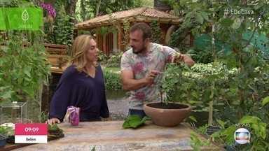 Aprenda a cultivar amora em casa - O engenheiro florestal Murilo Soares explica os cuidados necessários para o plantio
