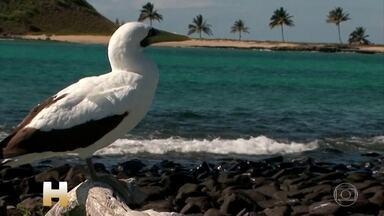 Manchas de óleo voltam a aparecer em Salvador e na região metropolitana nesta segunda (4) - Na Bahia já são 27 cidades mais o arquipélago dos Abrolhos. A preocupação continua grande, principalmente no sul do estado, onde fica o Parque Nacional dos Abrolhos.